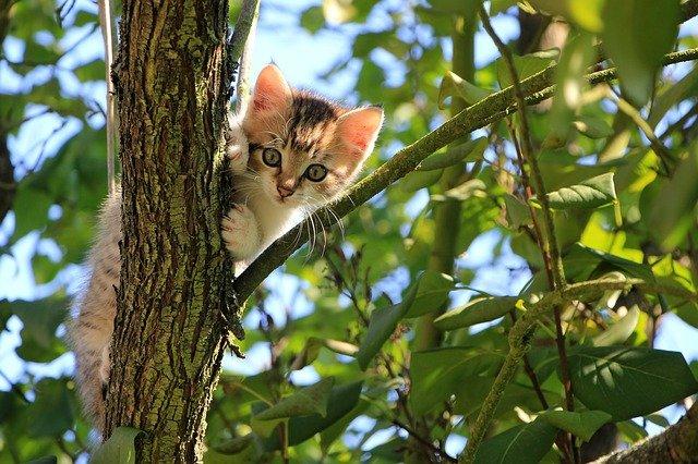 kotě na stromě